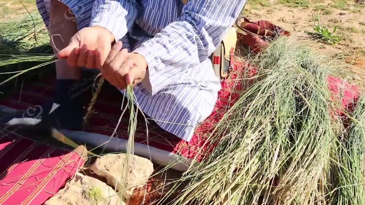 Photo of نبات الحلفا.. فرص اقتصادية وصناعية واعدة