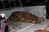 العثور على جثة مواطن بإحدى المزارع شرق شحات
