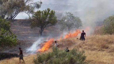 Photo of ارتفاع درجات الحرارة ساهم في انتشار الحرائق بالمسطحات العشبية والأشجار