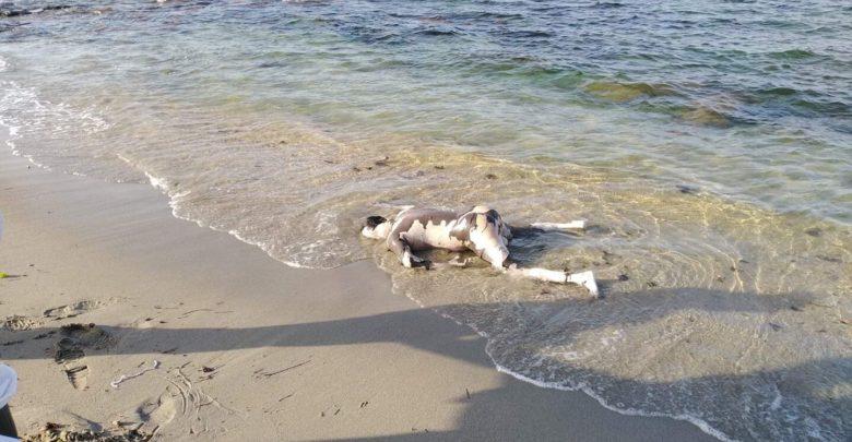 Photo of انتشال جثتين لمهاجرين غير نظاميين قبالة سواحل صبراتة