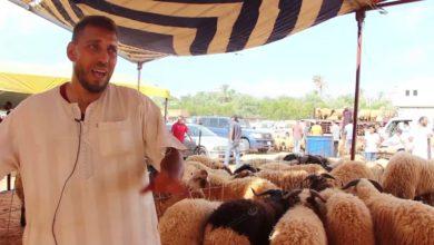 Photo of اختتام الحملة المجانية السنوية للكشف على أضاحي العيد من المواشي