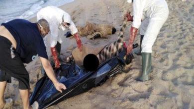 Photo of ثمانية جُثت لمهاجرين ظهرت على شواطئ مدينة الخُمس