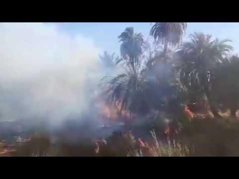 Photo of حرائق تلتهم آلاف من أشجار النخيل في تازربو