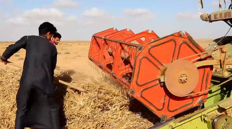 Photo of انطلاق موسم الحصاد بعدد من مناطق طبرق الشرقية