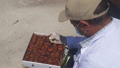Photo of الرقابة على الأغذية و الأدوية بنغازي تقوم بالكشف على شحنة من التمور المعدة للتصدير