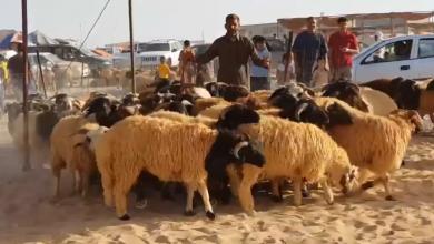 Photo of تفاوت أسعار الأضاحي في اجدابيا