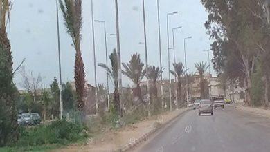Photo of تزيين مداخل مدينة العزيزية بأشجار النخيل ونباتات الزينة