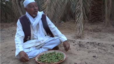 Photo of ثمار (الغمق) تؤكل في بعض أصناف النخيل دون غيرها