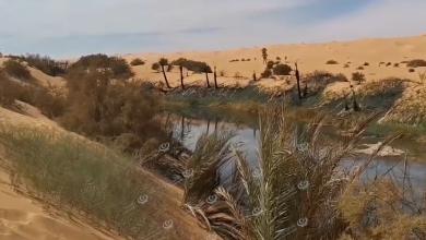 Photo of أهالي قبرعون يدينون الاعتداء على الغطاء النباتي المحيط ببحيرة (مافو)