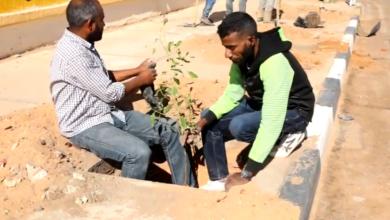 "Photo of انطلاق حملة تشجير (1000) شجرة ""تيكوما"" في سبها"